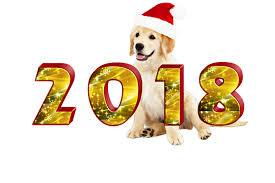 New Year's Resolutions for Your Pet(s)