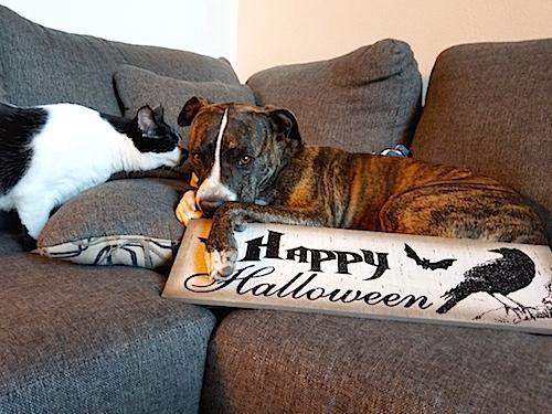 4 Rules your pet wants you to obey on Halloween