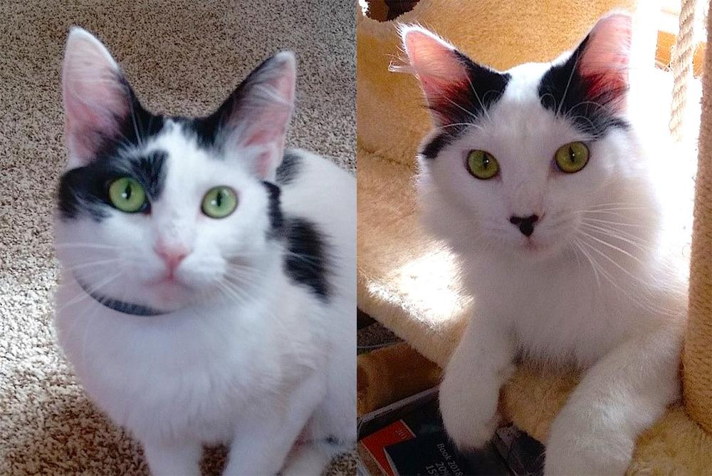 Mommy & Oreo – two nearly feral cats are now social