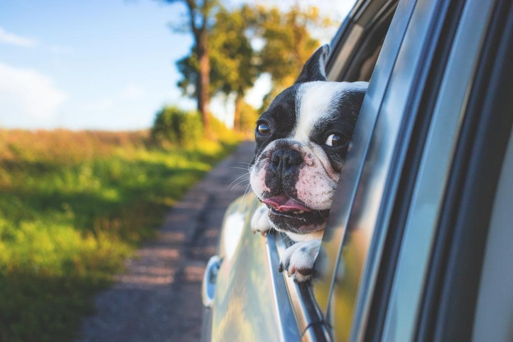 6 Tips For Stress-Free Travel With Pets