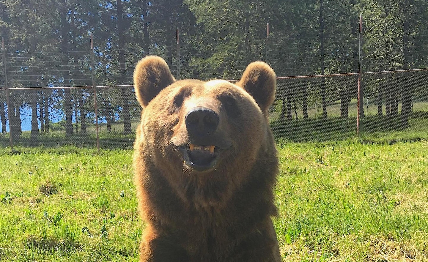 How Treatibles Organic Full Spectrum Hemp Oil gave Wildlife Safari's Oso the bear a new lease on life