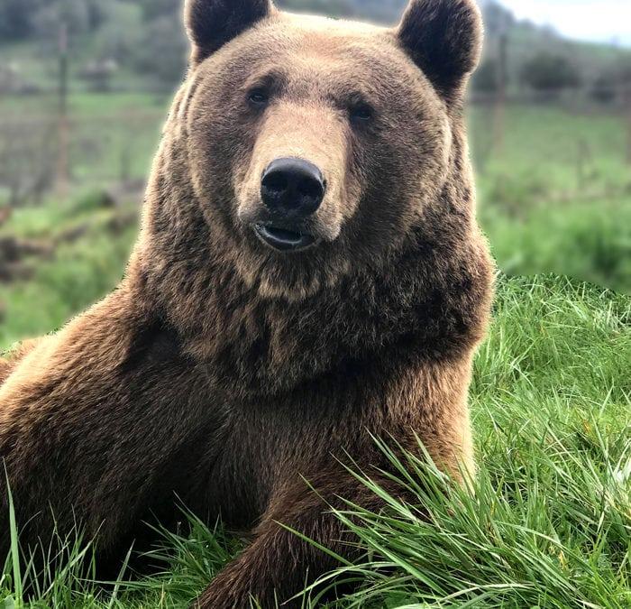 Wildlife Safari's Oso the Bear