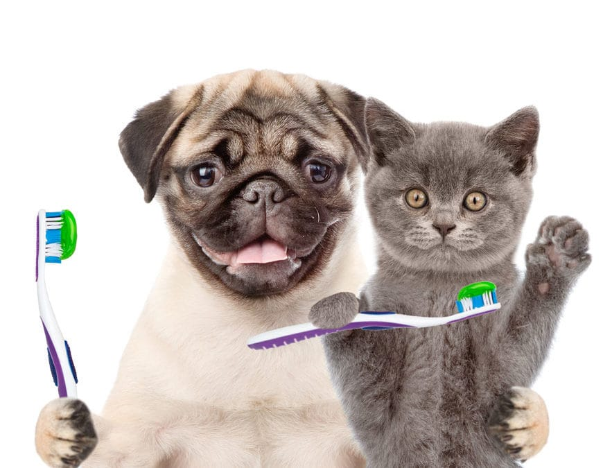 How Full Spectrum Hemp Oil Can Benefit Pets with Dental Issues