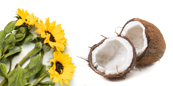 image of three sunflowers and a coconut cut in half