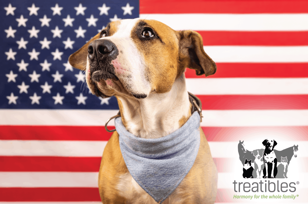 Keeping Pets Safe and Calm on July 4th