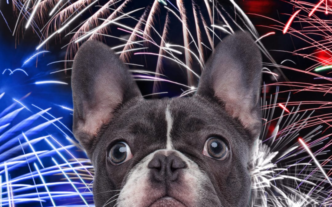 How to Prepare, Pay Attention, and Protect Pets for an Anxiety-Free July 4th