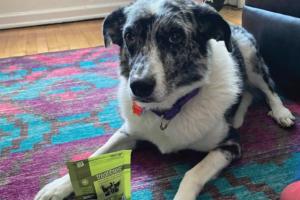 Mia the dog posing with Treatibles Hard Chews