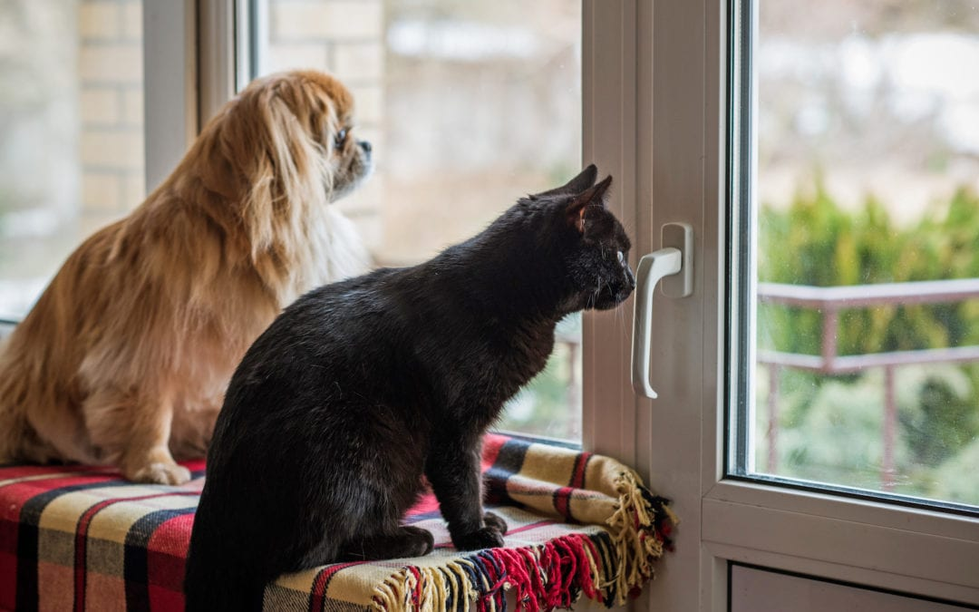 Helping Pets With Separation Anxiety