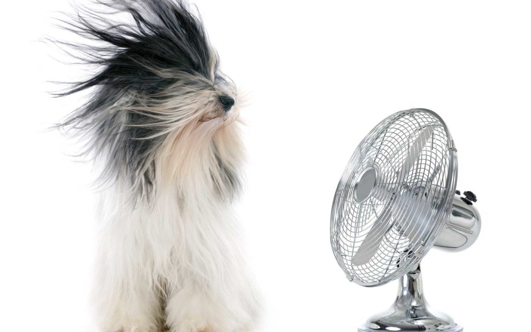 Summer's Here! How to Keep Pets Cool