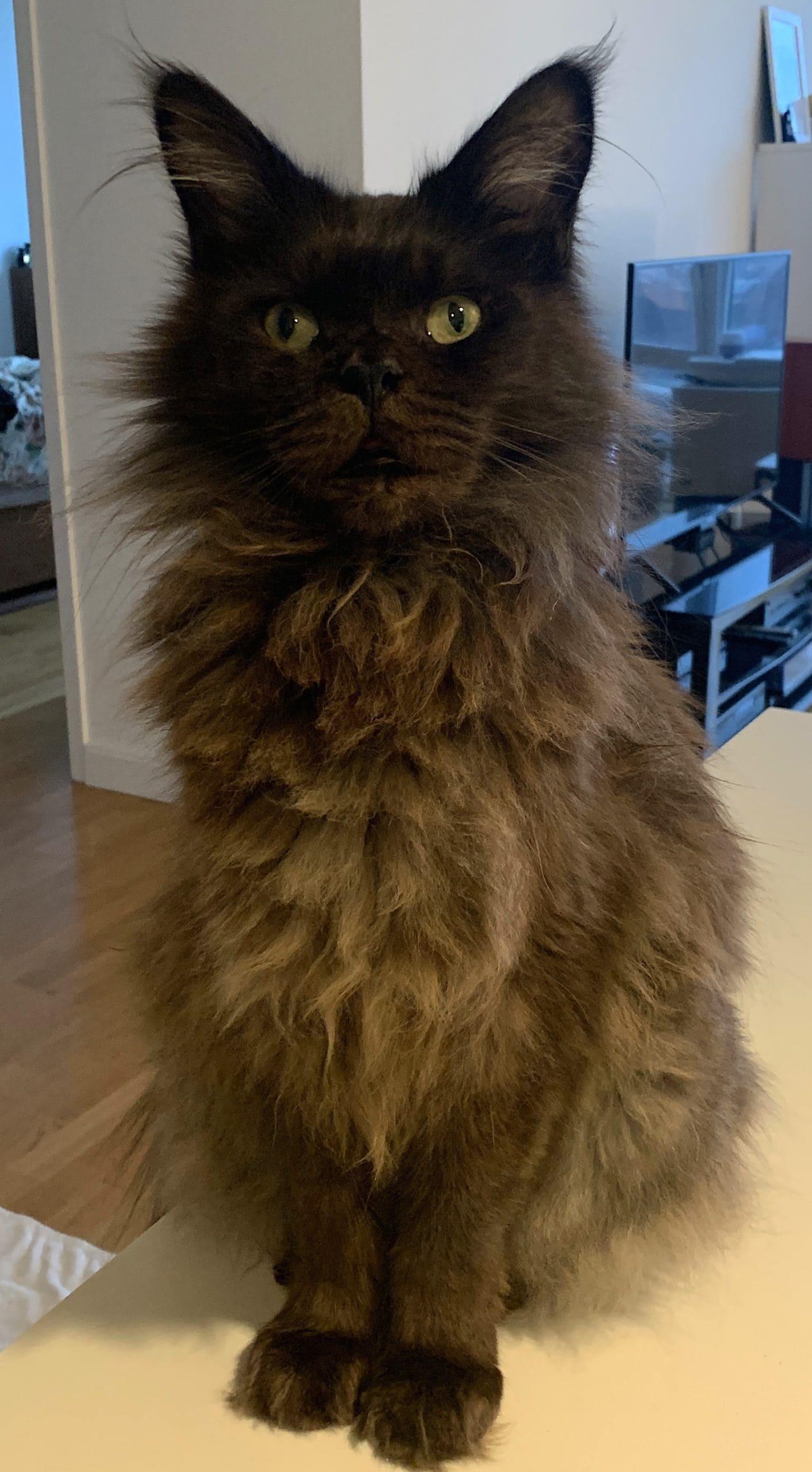 happy cat, Mogwai