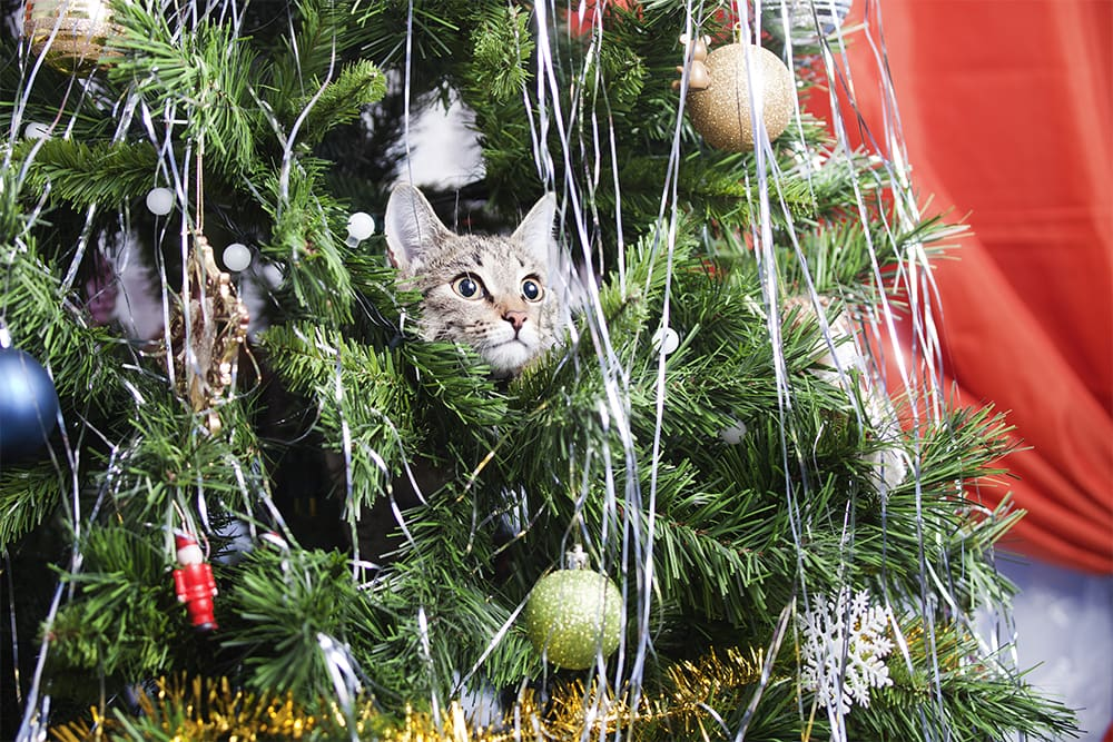 Keeping Pets Safe During The Holidays