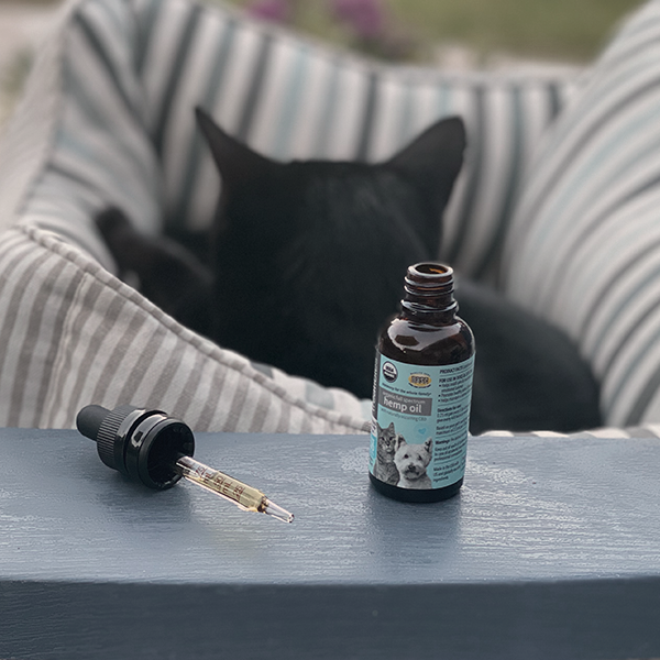 Image of black cat in a bed relaxing after taking Treatibles 90 mg Organic Full Spectrum Hemp CBD Oil