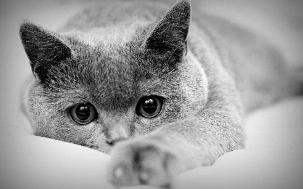 Sad cat feeling discomfort during pet pain awareness month