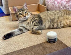 Tabby cat lounging