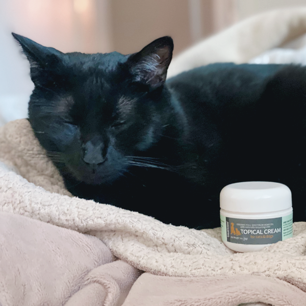 Image of black cat posing with a 1 oz container of Treatibles Topical Cream