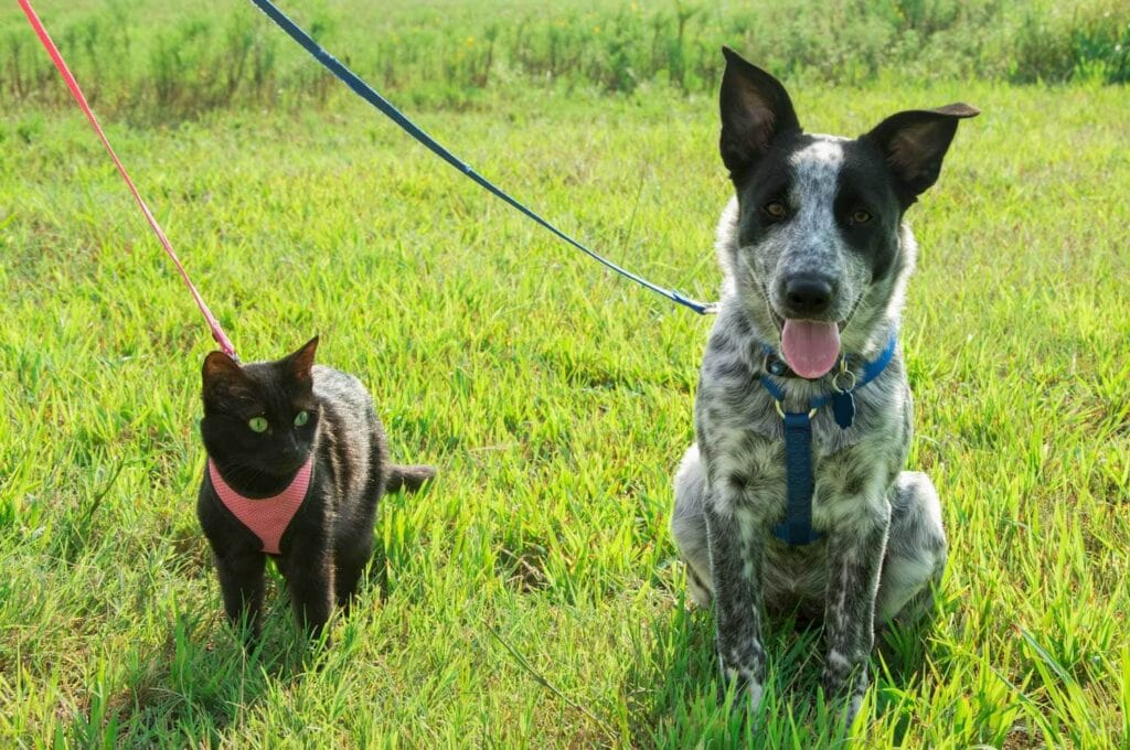 Cute dog and cat on leashes sitting side by side on green grass during walk your pet month