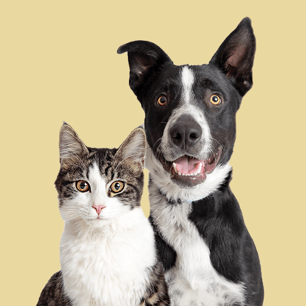 black and white cat and dog