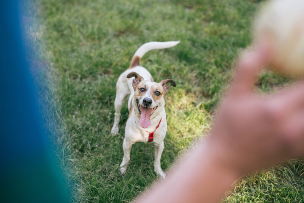 cute-dog-playing-catch during Active Dog Month