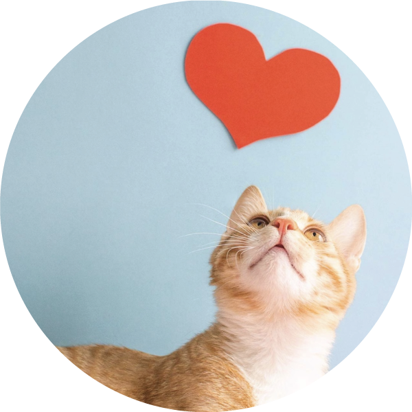 Cat Looking At Heart