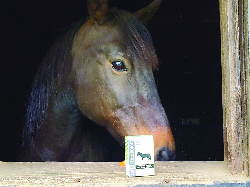 Greta the horse poses with her bottle of Treatibles CBD oil