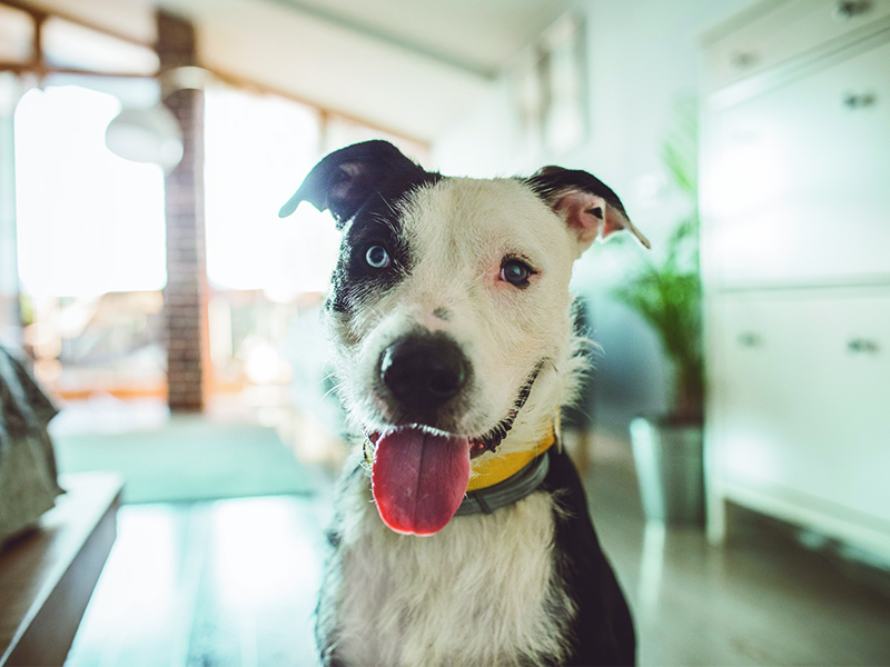 Adorable mutt with floppy ears posing on national mutt day